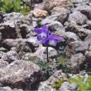 【8/1~9/27】ふるさとの植物写真展~春・夏・秋~