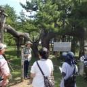 【8/29】「樹木医と歩く観察会」~樹木のルーツ探しにでかけよう~
